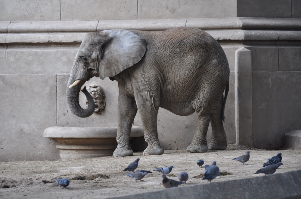 Elephant in Front of Building